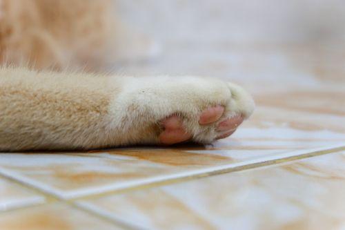 cat paws pets