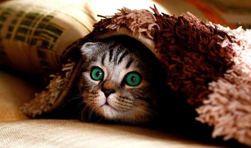cat blanket hide