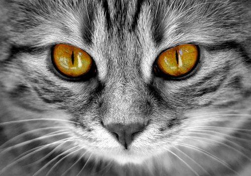 cat eyes cat's eyes