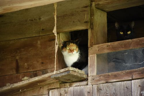 cat farmhouse cobwebs