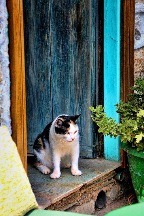 cat door lauer