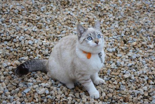 cat kitten pussy