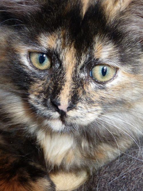 cat intense look eyes