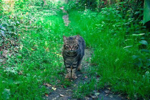 cat gutter nature