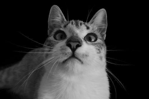 cat cute kitten