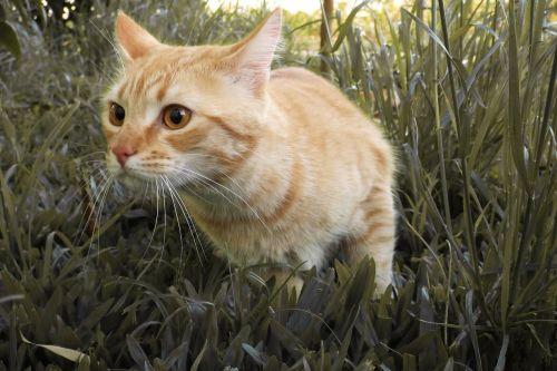 cat cute yellow