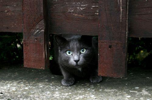 cat animals barrier