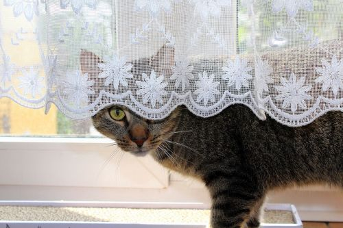 cat hiding pet