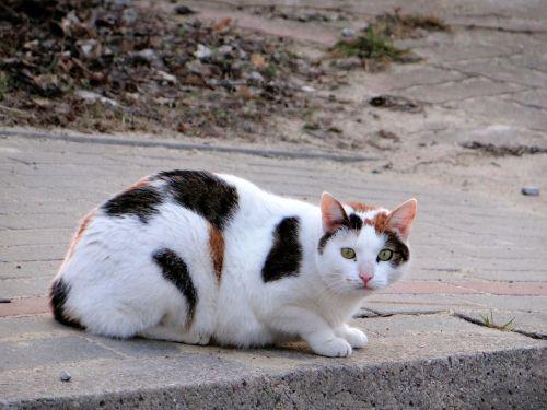 cat mammal slow living