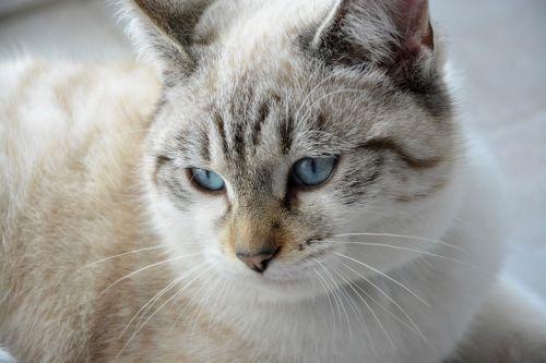 cat young cat head