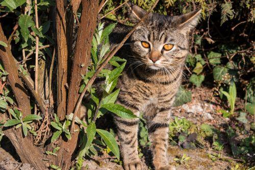 cat curiosity pet