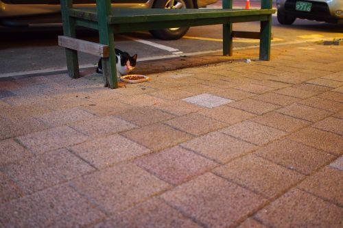 cat street cat nyan