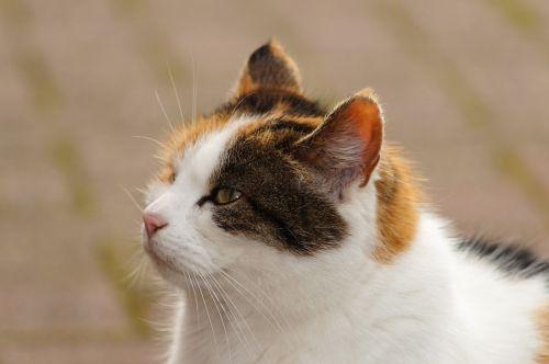 cat head portrait