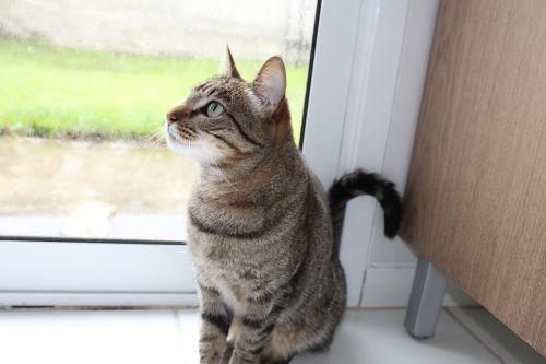 cat grass feline look