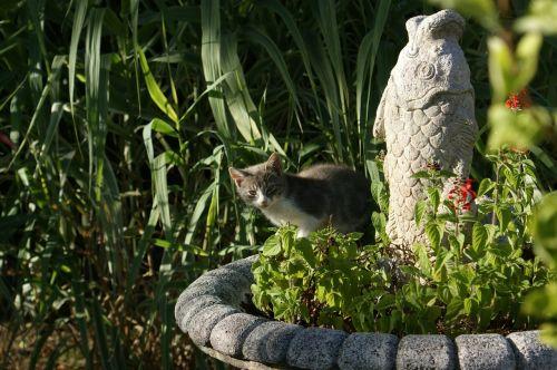 cat hidden fish statue