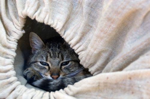 cat feline cat lying