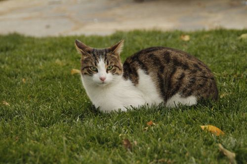 cat nature cute