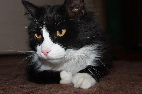 cat home housecat