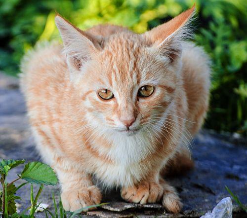 cat animal pussycat