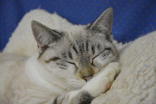cat cat sleeping head cat