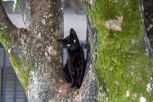 cat black cat black