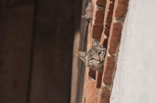 cat farm cat curious
