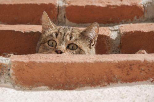 cat curious young cat