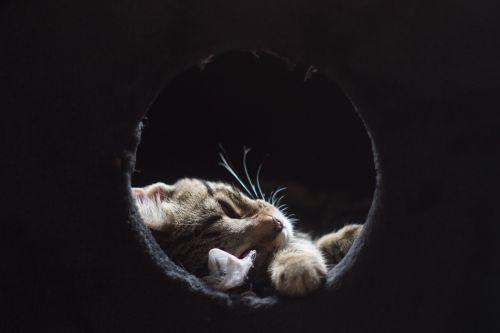 cat gata sleeping