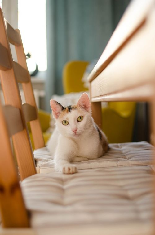 cat relaxation pet