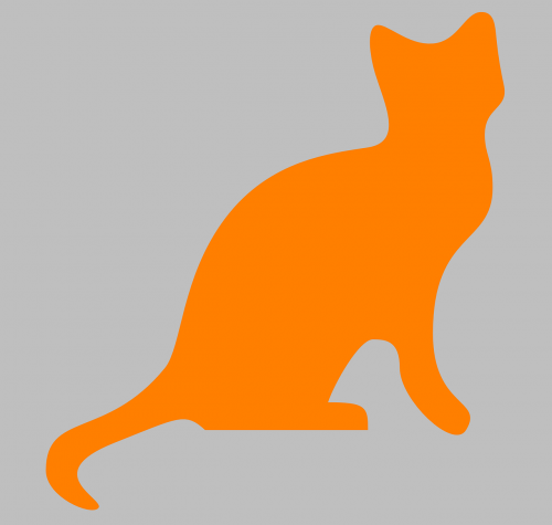 cat kitten animal