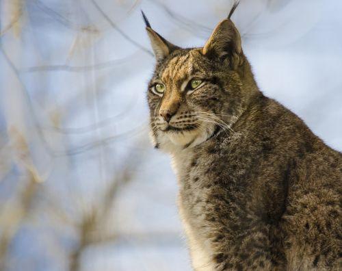 cat mammal animal