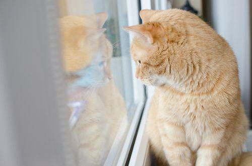 cat red cat redhat