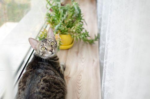 cat bury cat tabby