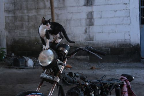 cat moto motorcycle