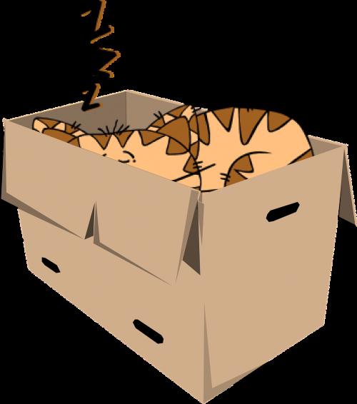 cat box sleep