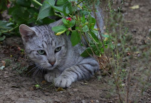 cat hidden flowers