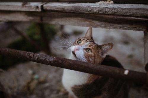 cat animal cute