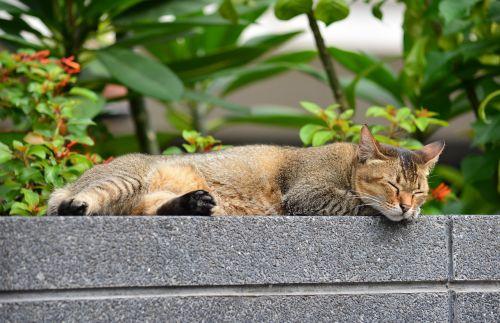 cat sleeping cat relax