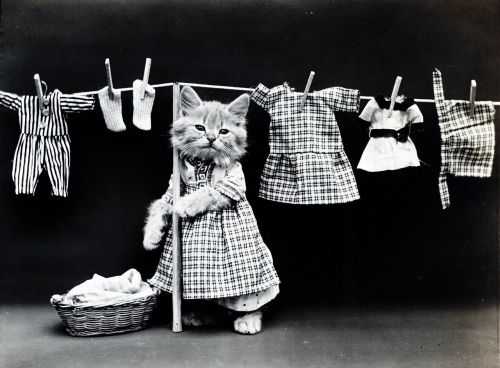 cat kitten dressed
