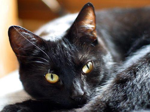 cat kitten eyes