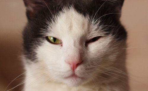cat cute eye