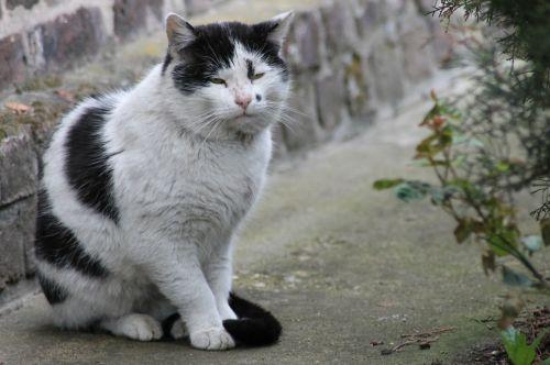 cat tomcat cat's eyes