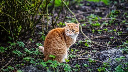 cat nature animal