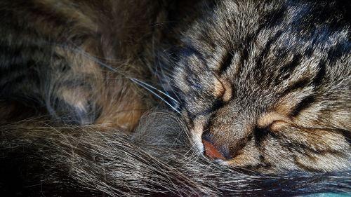 cat peace of mind animal