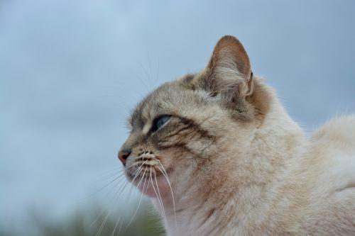 cat pussy portrait of profile