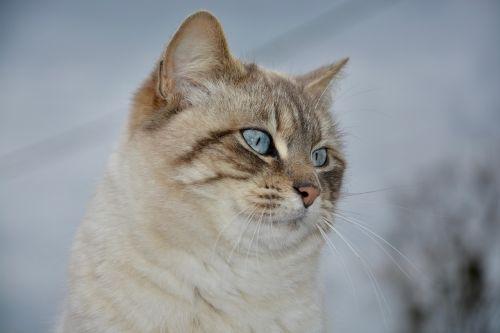 cat pussy nala portrait profile