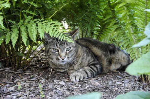cat hiding place fern