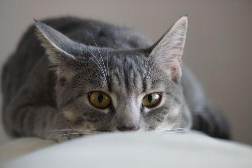 cat home cute