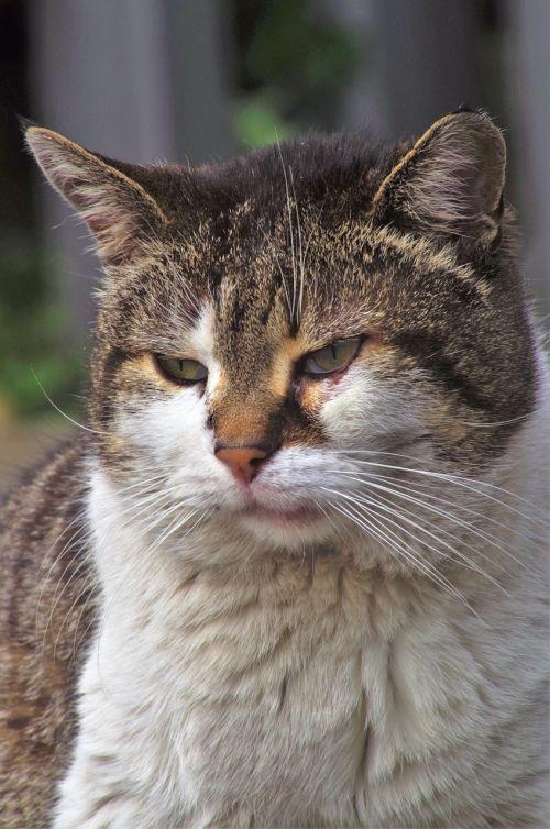cat calico cat stray cat