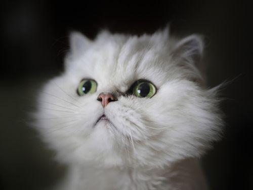 cat cute downy